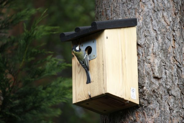 outdoor-bird-feeders